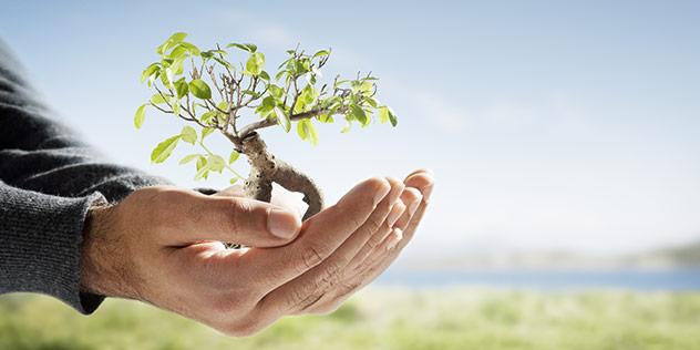 Pflanze in geöffneten Händen