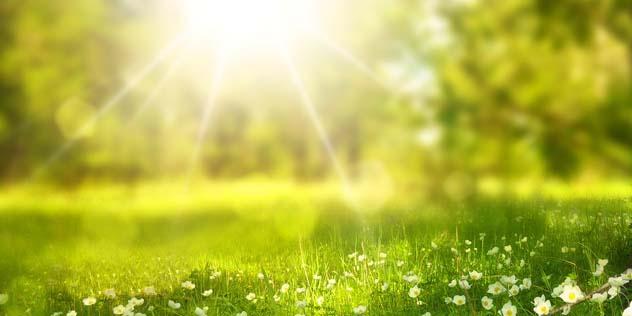 Sonne über einer Frühlingswiese